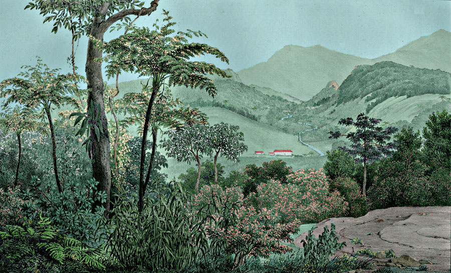 Etching 14 Morro Fermozo from Martius's Flora Brasiliensis 1840. Thanks to Lehigh U., Special Collections ! Color by Alberto and  C. Miranda Chor