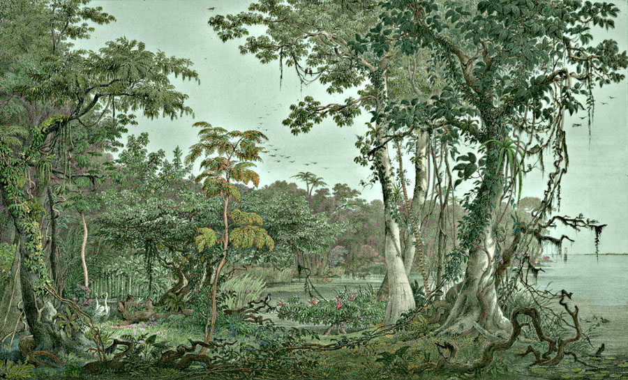 Etching 1 Banks of the Amazon from Martius's Flora Brasiliensis 1840. Thanks to Lehigh U., Special Collections ! Color by C. Miranda Chor