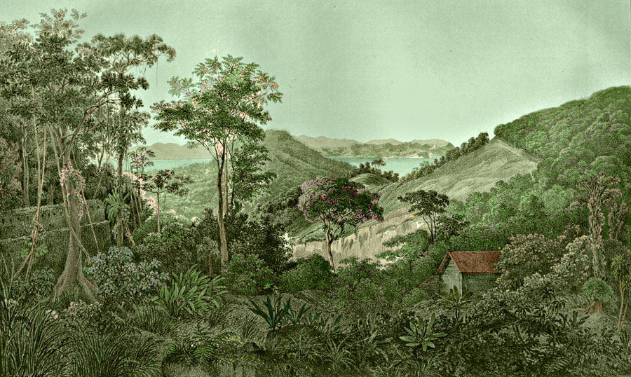 Etching 27 Corcovado forest  from Martius's Flora Brasiliensis 1840. Thanks to Lehigh U., Special Collections ! Color by C. Miranda Chor