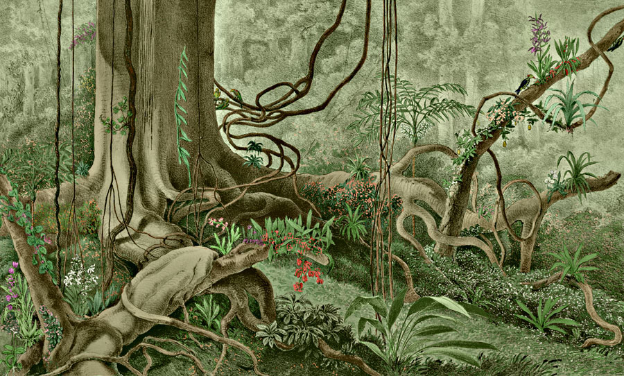 Etching 28 Ancient Forest  from Martius's Flora Brasiliensis 1840. Thanks to Lehigh U., Special Collections ! Color by C. Miranda Chor