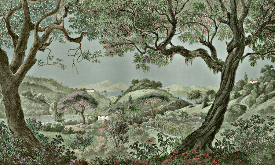 Etching 32  Valley of the Orange trees  from Martius's Flora Brasiliensis 1840. Thanks to Lehigh U., Special Collections ! Color by C. Miranda Chor