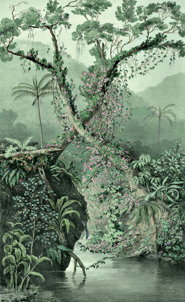 Etching 37 Ancient Forest  from Martius's Flora Brasiliensis 1840. Thanks to Lehigh U., Special Collections ! Color by C. Miranda Chor