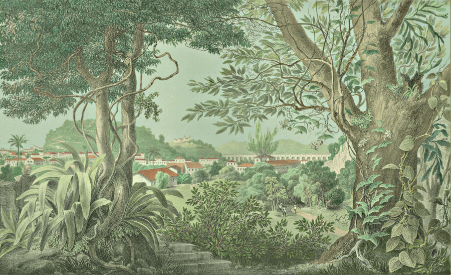 Etching 42 Mata-Cavallos  from Martius's Flora Brasiliensis 1840. Thanks to Lehigh U., Special Collections ! Color by C. Miranda Chor
